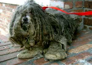 matteddog